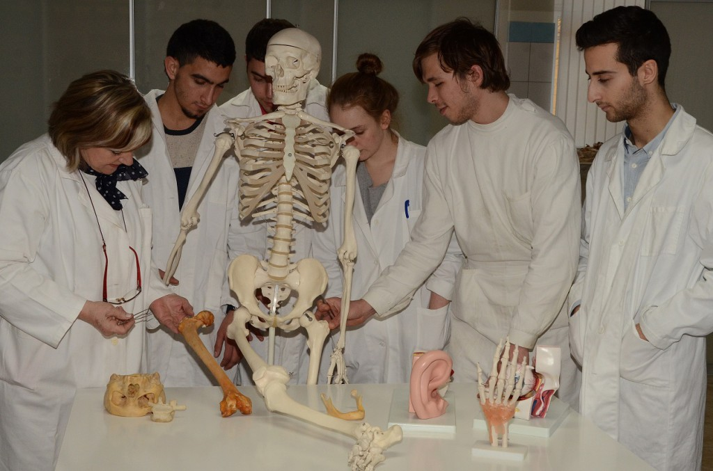 Anatomy at Faculty of Medicine